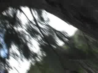 Porno Video of Masturbating In A Forest